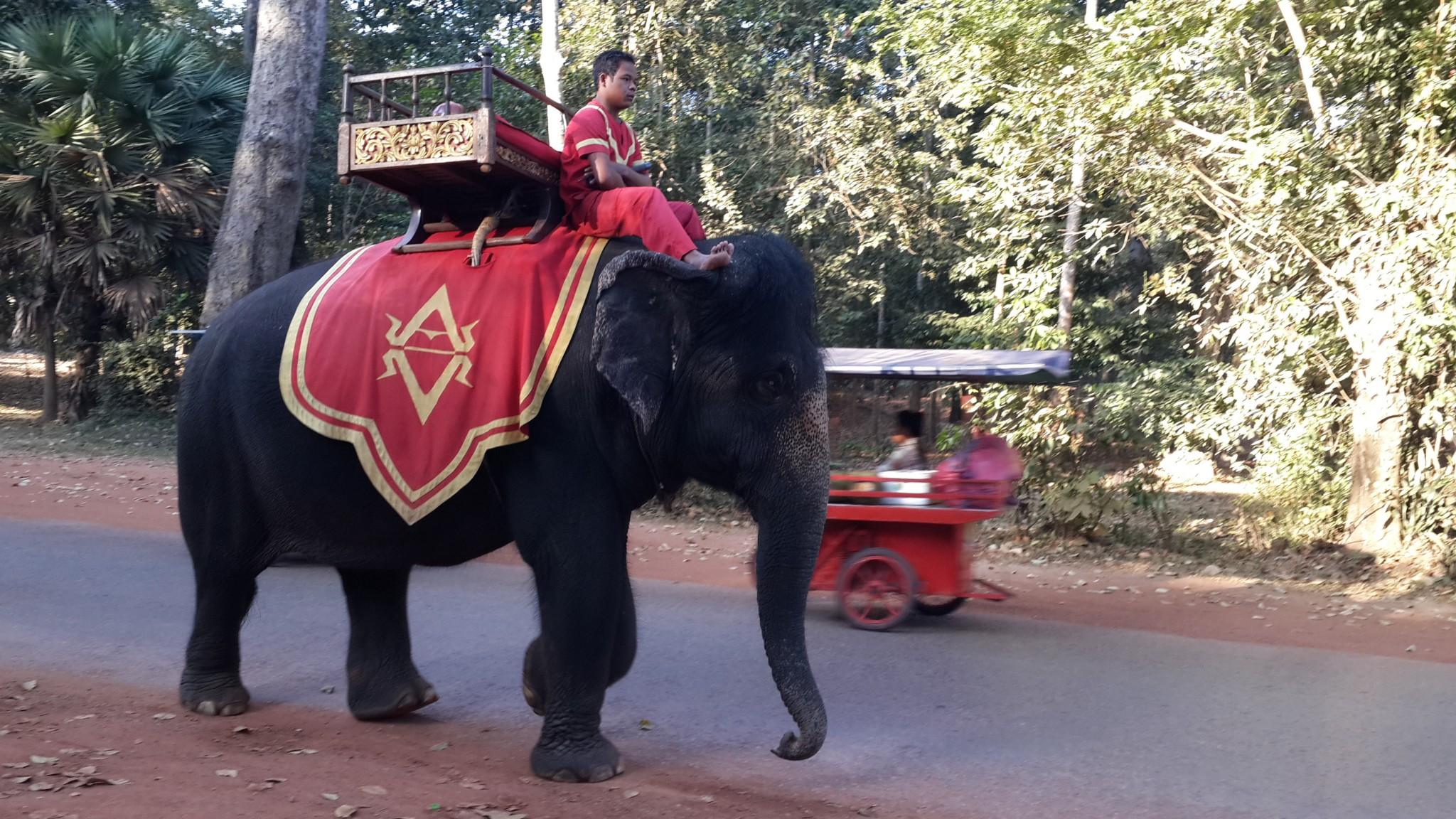 Elephant taxi at Angkor Wat.